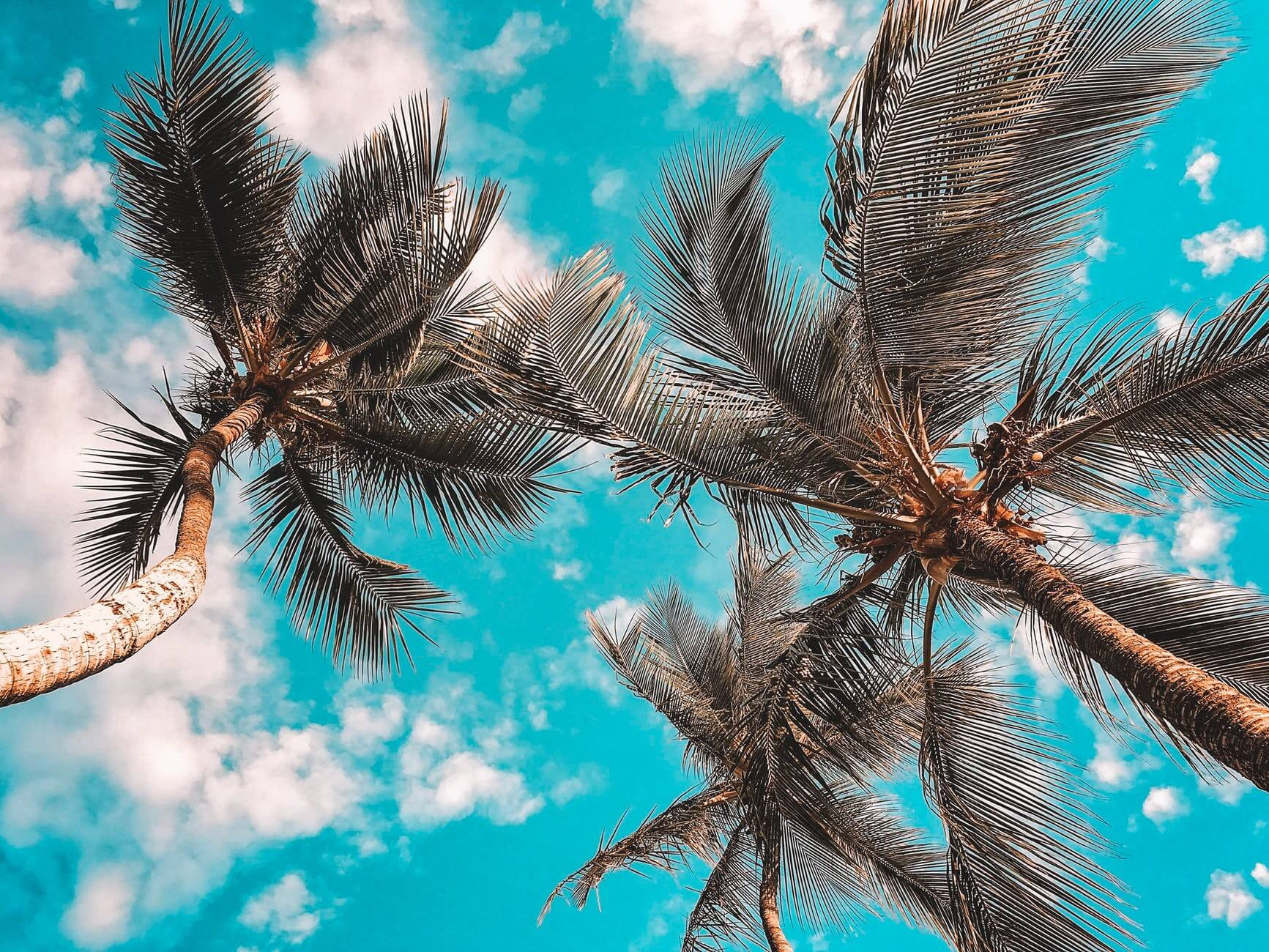 low angle photo of coconut trees